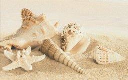 Декор Cracia Ceramica Amalfi Sand Decor 01 25x40