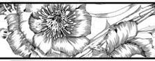 Бордюр Lasselsberger Азур Фриз цветы белый 10х25
